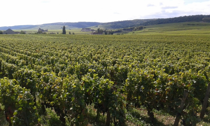 Burgundy Harvest Updates – 2014