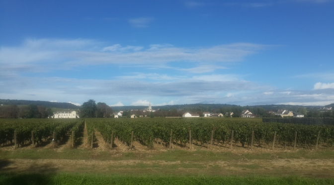 WHAT A DIFFERENCE A DAY MAKES ! Burgundy Harvest Update – Sunday, 21 September, 2014