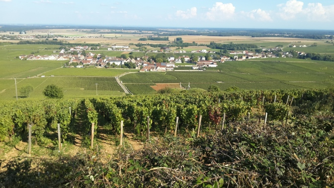 Burgundy Harvest Updates – Wednesday, September 17, 2014